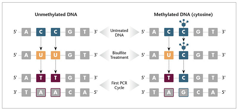 DNA-Methylation-2-2