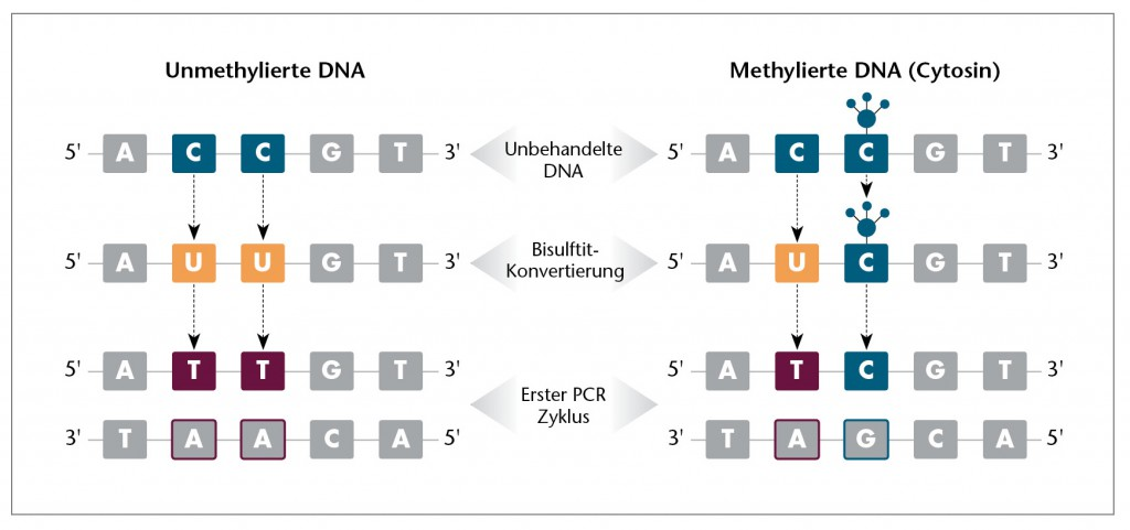 DNA Methylation-German