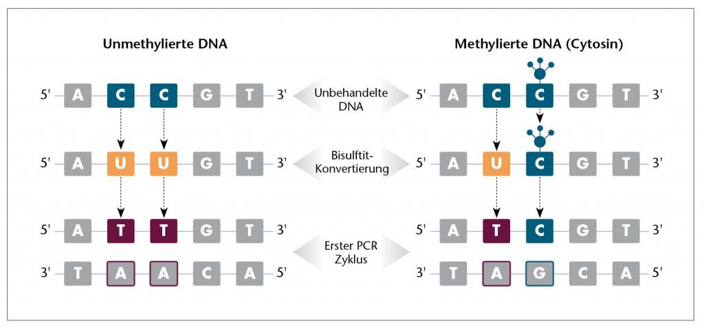 DNA Methylation-German