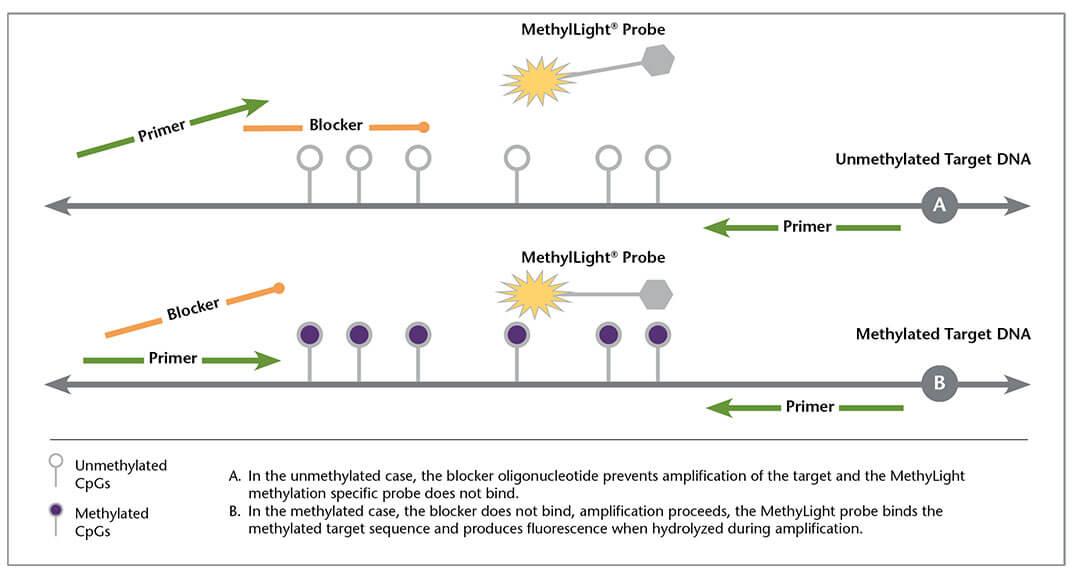 methylight-2-2